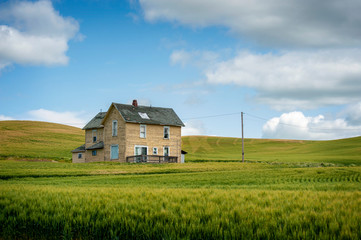 Abandoned Farmhouse in a Wheat Field. A classic farmhouse located in the palouse area of eastern Washington state sits in the middle of a maturing wheat field abandoned long ago as the main residence. Wall mural