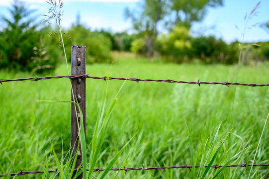 Metal T post with barbed wire fencing along edge of pasture field