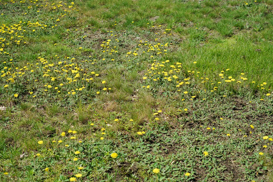 lawn in backyard in bad condition need weed control