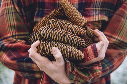 gathered pinecones in arms of boy wearing plaid jacked