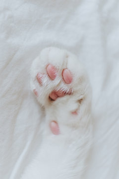 Close up of a paw cat