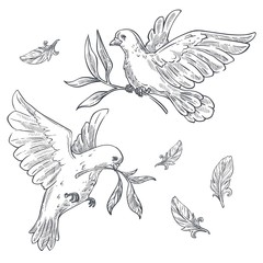 Doves or pigeons with olive branch or twig in beak isolated sketches
