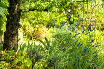 Garten in der Provence
