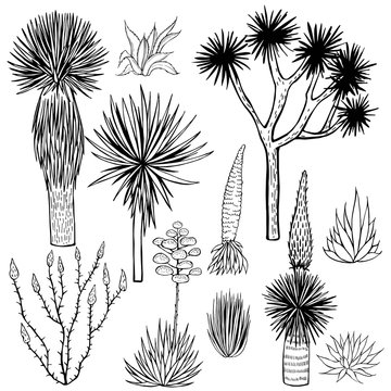Desert plants. Succulents. Vector sketch  illustration.