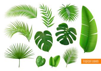 Tropical Leaves Realistic Set Wall mural