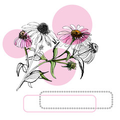 Collection  of  bouquets of pink echinacea flowers, circles and frames. Hand drawn ink and colored sketch.