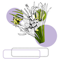 Set with monochrome and colored sketch of hemerocallis flowers bouquets, circles and frames. Hand drawn ink and colored sketch isolated on white background.