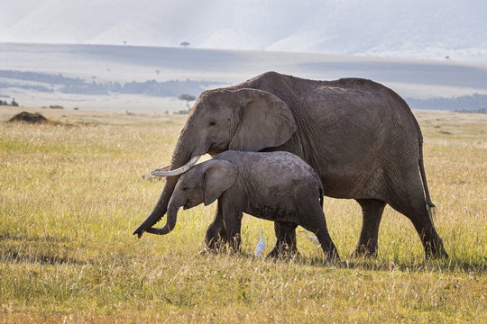 Mother and baby elephant in the grasslands of the Masai Mara, Kenya