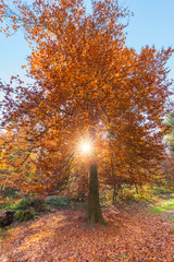 Sun rays between branches and fall foliage. Autumn.
