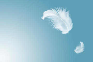 solf white feather floating in the air.