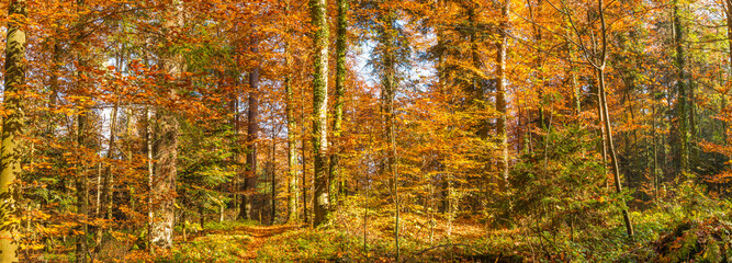 Panorama of the autumn forest.