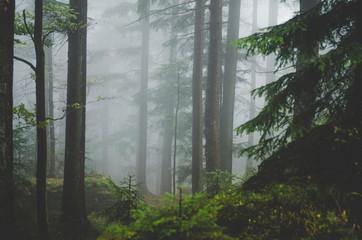 Foto op Aluminium Bossen Wald