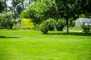 Fototapeta green lawn backyard garden house