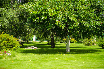 Keuken foto achterwand Lime groen green lawn backyard garden house