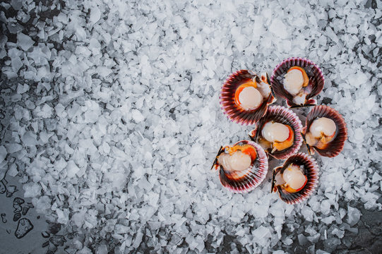 scallop seafood varieties on ice mussels
