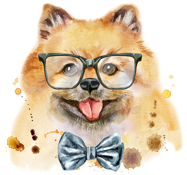 Watercolor portrait of dog pomeranian spitz with bow-tie and glasses