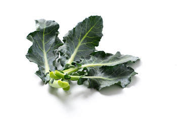 broccoli leaves isolated on white