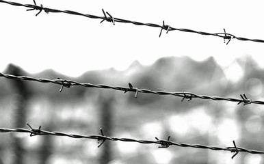 three lines of barbed wire with thorns