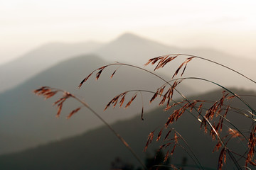 Scenic mountain landscape. Caucasus Mountains at sunset. Graass stalks on hazy mountains background.