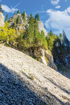 trees on steep rocky slope. beautiful nature scenery on a sunny day. canyon of Cetatile Ponorului cave sculpted by river located in apuseni natural park, romania. clouds on the blue sky in autumn
