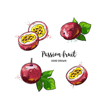 Passion fruit drawing, passion slice and whole juicy fruit. Watercolor passion fruit on a white background. Vector isolated illustration