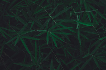 bamboo leaves dark nature background.