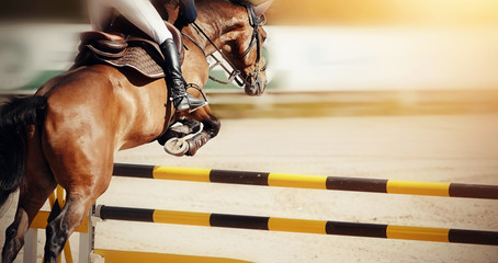 The brown horse overcomes an obstacle.Show jumping