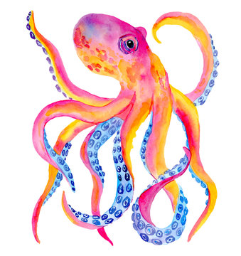 Watercolor pink orange octopus isolated on white background. Hand painted neon colors illustration.