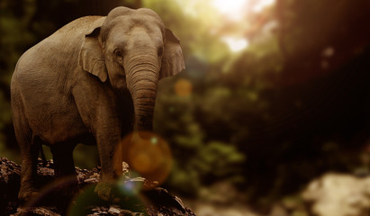 Asian Elephant Graphic Image Design