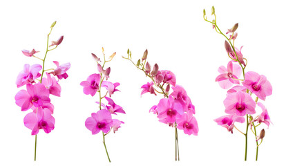 Blurred for Background.Pink orchid flower on white background. Photo with clipping path.