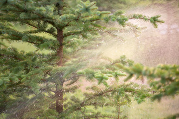 water splash on a tree, wet tree