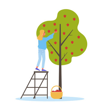 Woman gathering apple from the tree