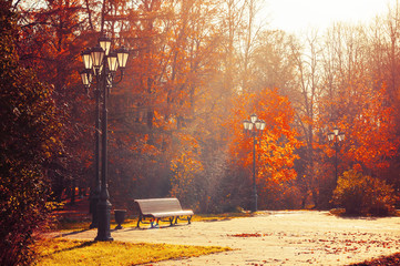 Autumn September morning landscape. Bench at the autumn alley under colorful deciduous autumn trees.