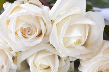 Beautiful white rose flowers bunch  background