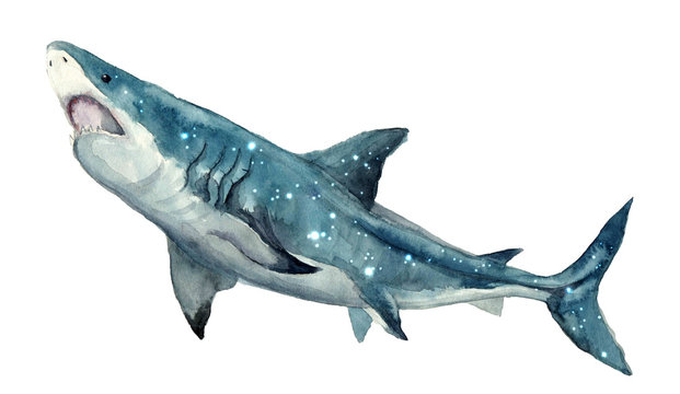 Watercolor shark on the white background. Hand-painted realistic underwater animal art.Humpback, Grey, Blue, Killer, Cachalot, Bowhead, Beluga,  for design, print, sticker or background postcard