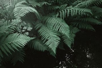 fern leaves and the dark forest stream