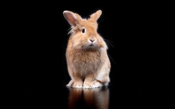 Cute decorative rabbit on black background