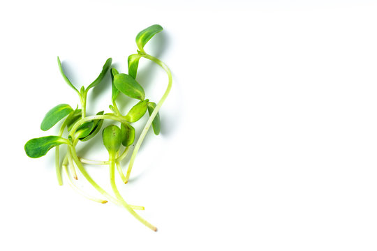 Layout with pea shoots isolated on white background with copy space