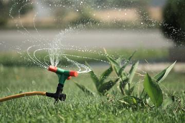 lawn sprinker. grass irrigation. watering.