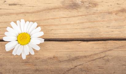 Kamillenblüte auf Holzhintergrund
