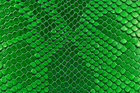 Green snake skin, as background. Reptile.