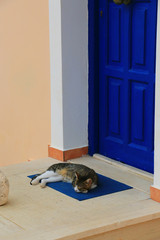 Domastic cat sleeps in front of the home door