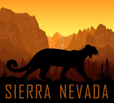 vector Sierra Nevada range mountains  with puma cougar (Puma concolor) or mountain lion