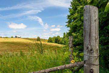 farm fields in early summer