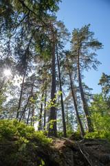 Uutela forest in eastern part of Helsinki