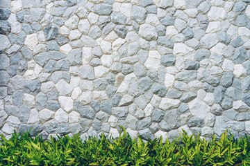 Stone wall texture with green leaves fern for background.