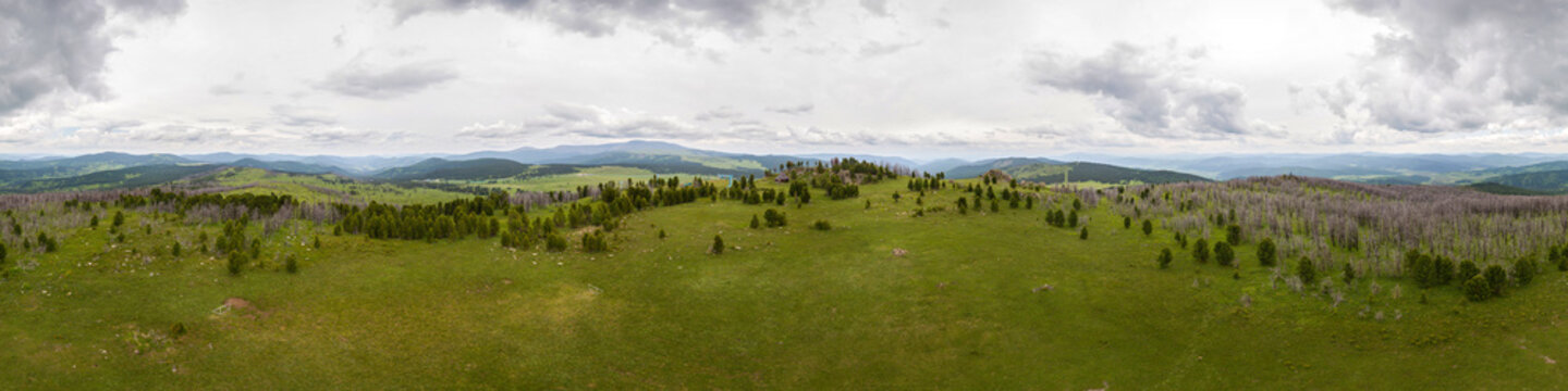 A landscape view of beautiful fresh green forest and  Altai mountain background.  Panoramic view of beautiful green forest in the Altai mountains