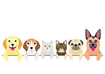 senior dogs and cats in a row