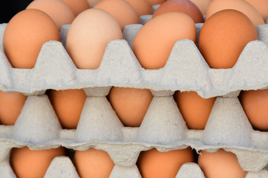 Organic Free-Range Brown Eggs
