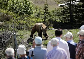 Visitors look at bear Napa at the Arosa Baerenland sanctuary in the mountain resort of  Arosa
